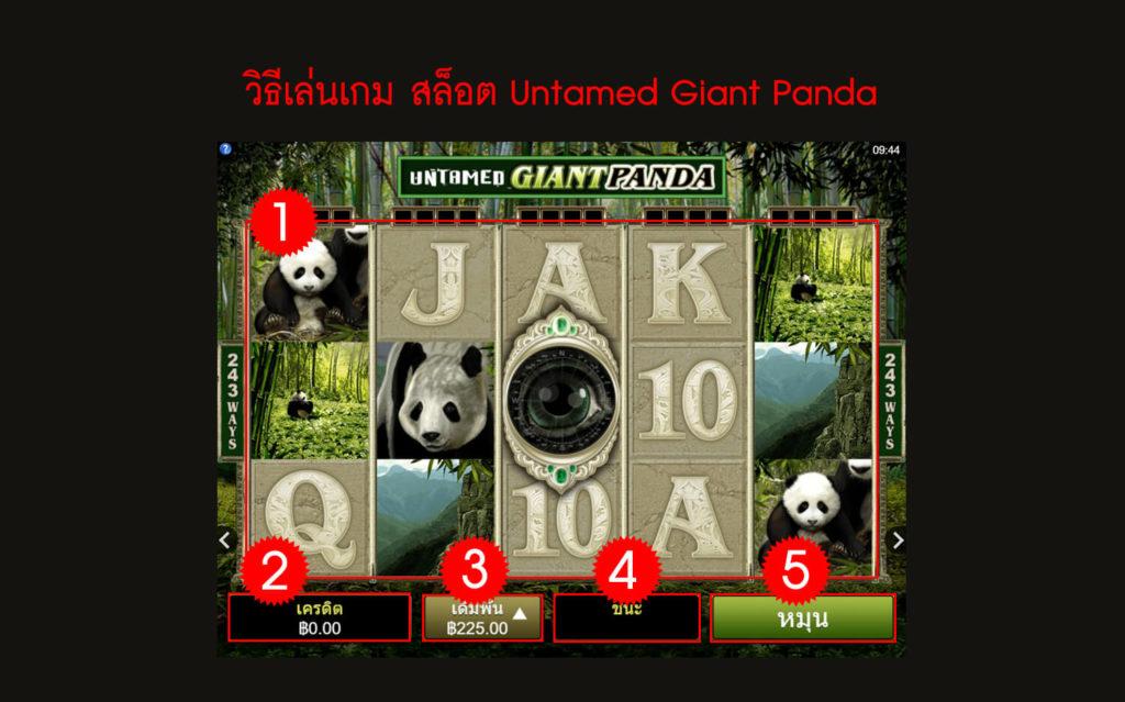 กฎกติกา วิธีเล่นสล็อต Untamed Giant Panda Slot